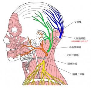 後頭下神経 2